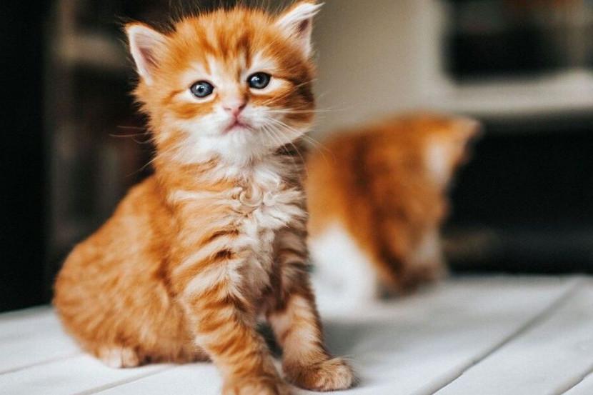 Pembunuhan 5 Kucing Akibat Virus COVID-19 di China Timur